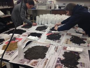P3 students prepare soil for testing.