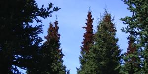 102_asst_trees_KL - crop