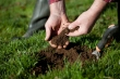 Hands holding a scoop of dirt next to trowel and freshly dug hole in grassy area.